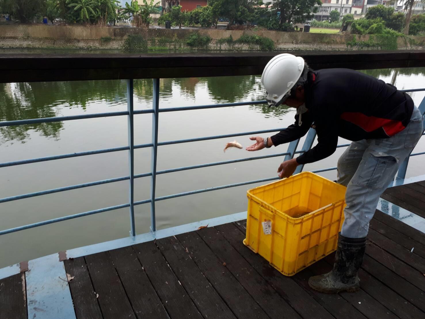 剩餘魚群經打撈 已由廠商載往下游野放