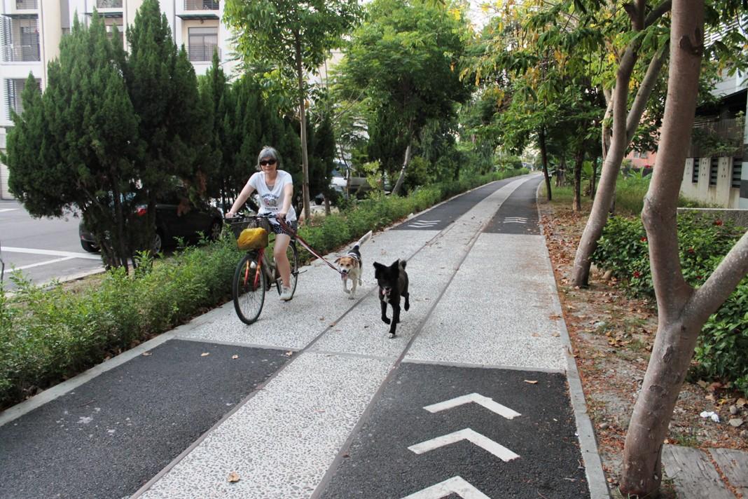 剛完工的糖鐵自行車道使用率相當高