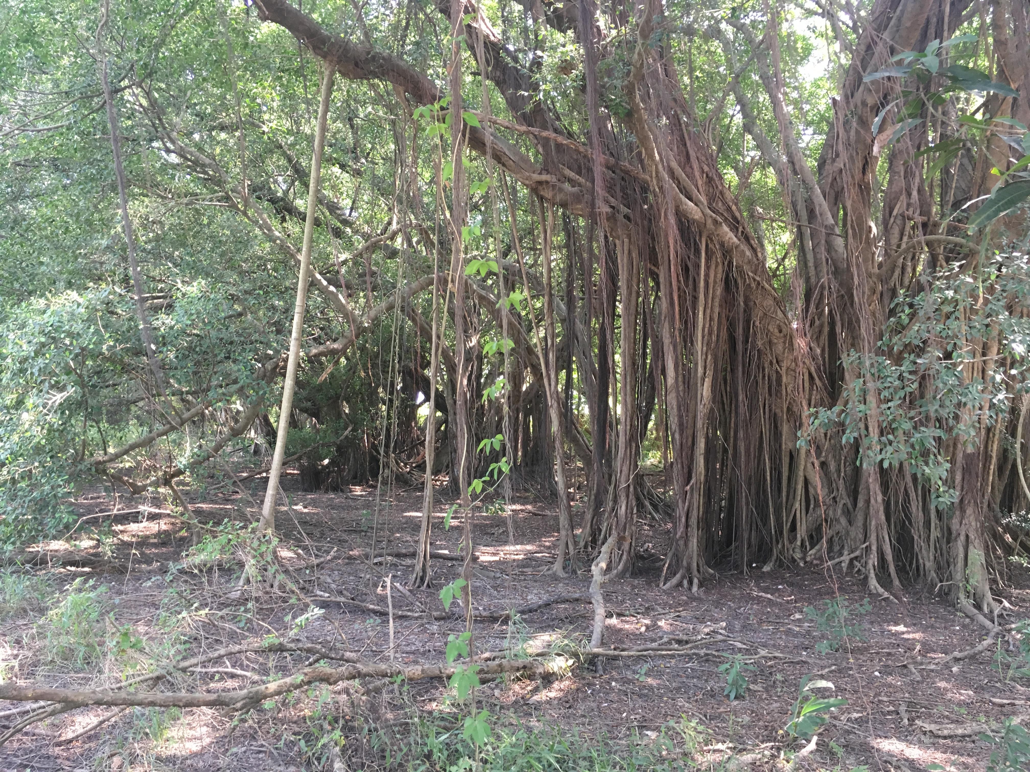 封閉多時的營區內部林相豐富極具生態性,將會以保留、減法設計及融入環境等之手法改造