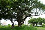 臺南市運河星鑽再生自然生態公園,期許成為中西區生態教室