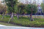 人本環境的建構-臺南市都市設計審議原則修正通過